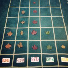 Leaf graph after our leaf hunt! Kindergarten fall graphing unit.