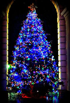 Pasadena Christmas Tree, California