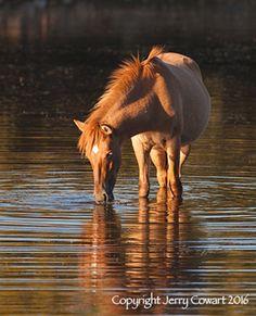 Wild Mustang On Salt River Arizona by PhotosbyJerryCowart on Etsy