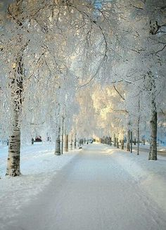 Snowy paths and white coated trees... Magical.