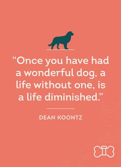 Right? #DogVacayQuotes