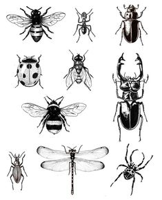 Flower And insect tattoo Insect Tattoo Designs Ideas Design Trends Prem. - Flower And insect tattoo Insect Tattoo Designs Ideas Design Trends Premium – A Regular F - Nature Tattoos, Body Art Tattoos, Tattoo Drawings, Tatoos, Bugs Drawing, Lady Bug Drawing, Beetle Drawing, Insect Art, Insect Crafts