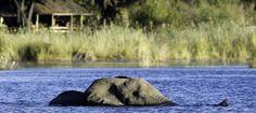#safari #botswana #linyanti-savuti-area #dumatau-camp #travel #honeymoon