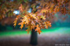 Sounds of Autumn by Ben Pearse on 500px