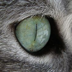 """Cats' eyes seem a bridge to a world beyond the one we know."" --Irish Proverb"