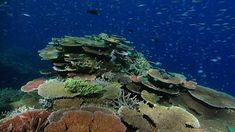 Coral bleaching: Scientists 'find way to make coral more heat-resistant' - BBC News