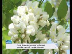 Florile de salcâm tratează zeci de afecțiuni. Cum să le consumi - YouTube Mai, Youtube, Plant, Youtubers, Youtube Movies