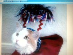 4th of July Feline
