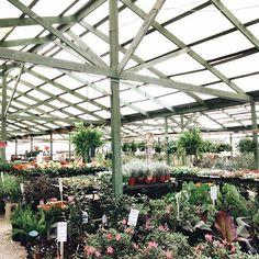 Where to get your plants in Waco this spring