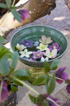 © Minna Mercke Schmidt blomsterverkstad | Livet med trädgård, uterum och växter Float flowers in water baths....