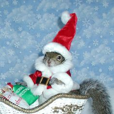 Kelly Foxton and Sugar Bush Squirrel - The most photographed squirrel in the world - Pictures - CBS News Squirrel Memes, Cute Squirrel, Baby Squirrel, Squirrels, Cute Funny Animals, Cute Baby Animals, Animals And Pets, Christmas Squirrel, Christmas Animals