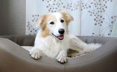 Edles Hundebett für große Hunde. Schönes Zusammenspiel aus Form, Material und Funktion. Inklusive gelenkschonendem Innenkissen.