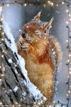 Forest Animals, Nature Animals, Animals And Pets, Funny Animals, Cute Animals, Baby Animals, Animals In Snow, Wildlife Nature, Nature Nature