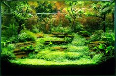 Aquascaping | International Balkan Aquascaping Contest 2012- The results