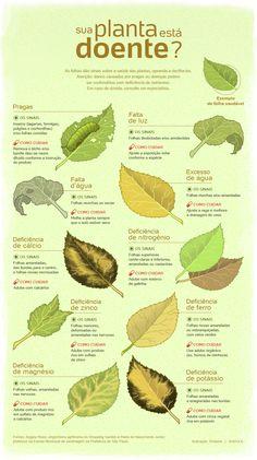 Descubra por que suas plantas estão infelizes