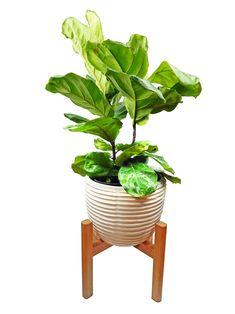Large Mid Century Modern Plant Stand, Wooden Plant Stand, Modern Planter with Stand,Indoor Plant Stand, Wood Plant Stand, West Elm Planter Stand,Modern Minimalist Planter