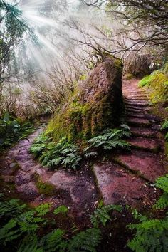 Aurissilva Forest (UNESCO World Heritage) path in Madeira, Portugal. An outstanding relict of a previously widespread laurel forest type. It is the largest surviving area of laurel forest & is believed to be primary forest. - photo via Around the World Foto Nature, Forest Path, Deep Forest, Forest Fairy, Belle Photo, Pathways, Beautiful Landscapes, Wonders Of The World, Places To See