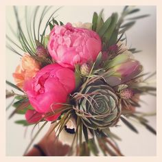peonies succulents and air plants <3
