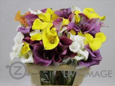 Today in the OZ Export webshop Specials: Zantedeschia Mix Crazy, 55 cm, x 80 st by De Haas Callas.