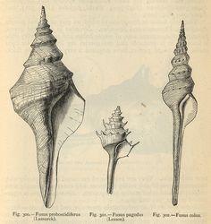 Study of Shells