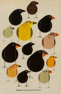 Darwin's Finches ~ Charley Harper