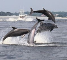 Swim with Dolphins and Explore Shell Island, Panama City Beach, Florida - PCB Visitor