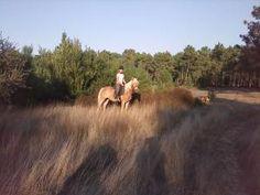 Quinta da Tarrajana. Endless atlantic beach - trails for experienced riders to the beach from the Blue Coast, Portugal.