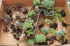 how to create a succulent monogram wreath, flowers, gardening, succulents, Just keep adding more succs until it begins to take shape
