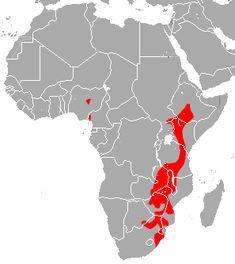 Bushveld horseshoe bat - Wikipedia