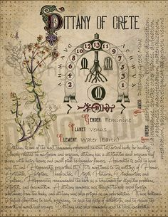 Magic plant knowledge has a long history and has a place in the modern witches Book of Shadows. Book of Shadows page. Dittany of Crete Herbal Witch, Witch Herbs, Magick Spells, Wicca Witchcraft, Hedge Witchcraft, Magic Herbs, Herbal Magic, Modern Witch, Practical Magic