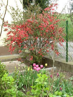 © Renate Egger. Frühling/Spring, 2015 Spring 2015, Garden, Plants, Garten, Lawn And Garden, Flora, Gardening, Outdoor, Plant
