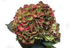 Цветочные магазины ОРАНЖ: продажа цветов и букетов, флористика