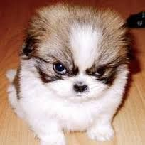 my cute dog so lovely.