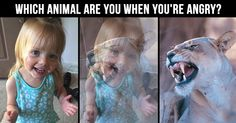 Which animal are you when you're angry?