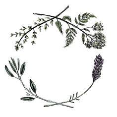 Yarrow, sage, lavender, thyme healing wreath