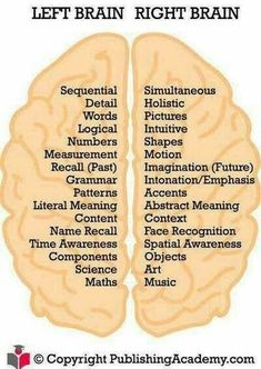 Brain Anatomy, Anatomy And Physiology, Developement Personnel, Left Brain Right Brain, Health Tips, Health And Wellness, Brain Facts, Brain Science, Brain Gym
