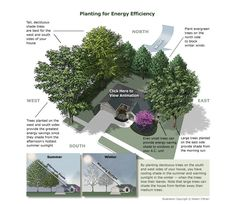 Planting for energy efficiency
