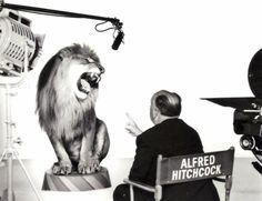 Metro-Goldwyn-Mayer Lion with Hitchcock