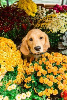 animal, dog, and photography image