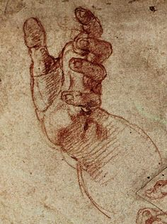 anatomy by Michelangelo - human study