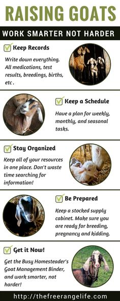 The Busy Homesteader's Goat Management Binder - The Free Range Life