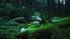 Mountain forest 2 - SONY DSC