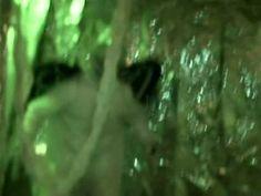 Disturbing Alien abduction video .
