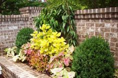 Bonnie Helander Blogs about Ideas for Gardens at the Southern Living idea House in Senoia | Fayette Woman