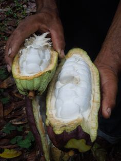Photo Essay: A Chocolate Maker Journeys to the Cacao Source
