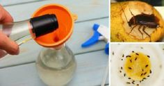 How To Get Rid Of The Insects In The Kitchen Forever: Mosquitoes, Cockroaches And Ants Will Never Come Back Again Cool Shapes, Box Cake Mix, Cooking Bacon, Cake Mix Recipes, Slice Of Bread, How To Make Cookies, Breakfast Time, Baking Tips, How To Get Rid