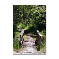 Hey, I found this really awesome Etsy listing at https://www.etsy.com/listing/239495039/nature-walk-photography-print-nature