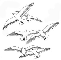Seagulls Coloring page vogels Pinterest Bird Embroidery and