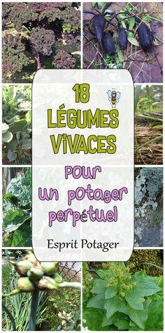 18 legumes vivaces pour un potager perpetuel. Découvrez des légumes anciens et pour à planter dans votre jardin. Repousse chaque année quasiment sans entretien. Crosne du japon, chou daubenton, oca du pérou, ail rocambole, oseille, etc...