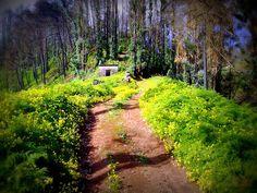 Madeira island magic